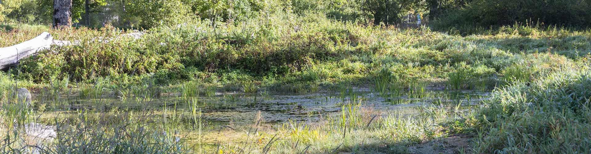 L'étang du Jardin des mineurs, à la Presta, dans le Val-de-Travers